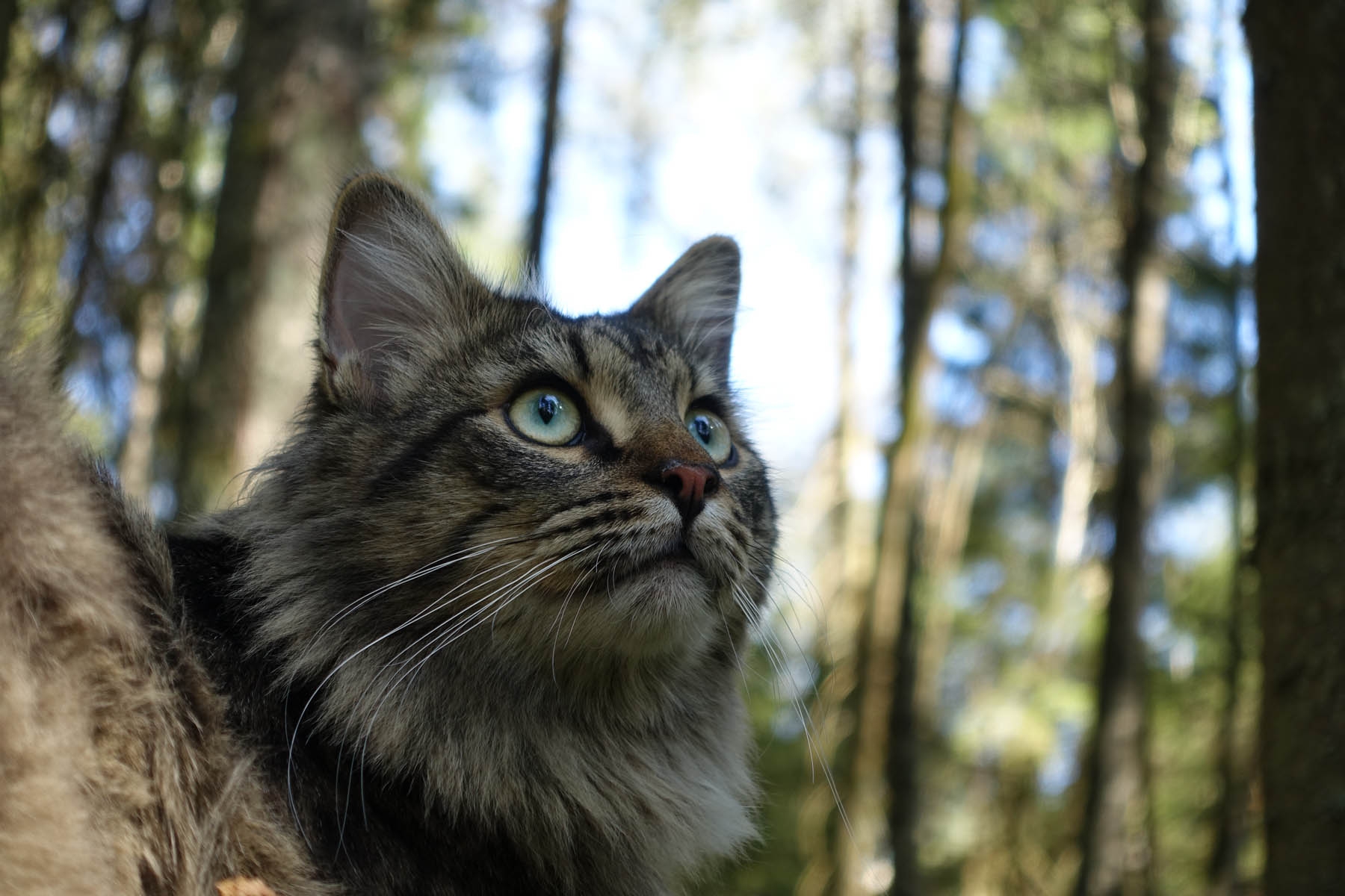 Natures Menu Cat Food