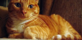 Managing your cat's weight