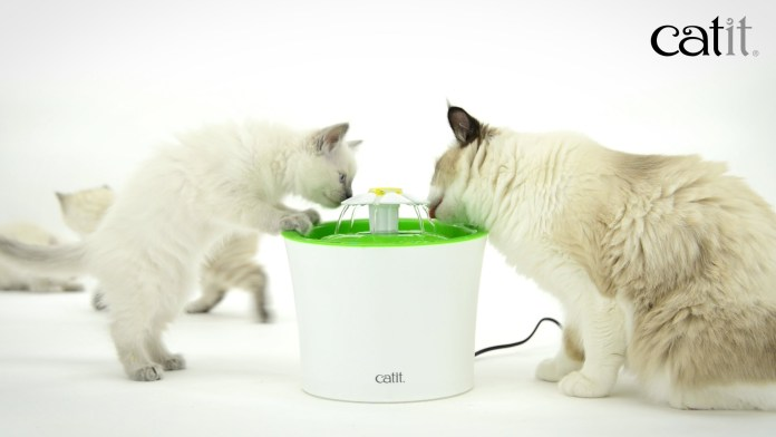The Catit Flower Fountain — our favourite cat water fountain and ideal for keeping cats cool in Summer