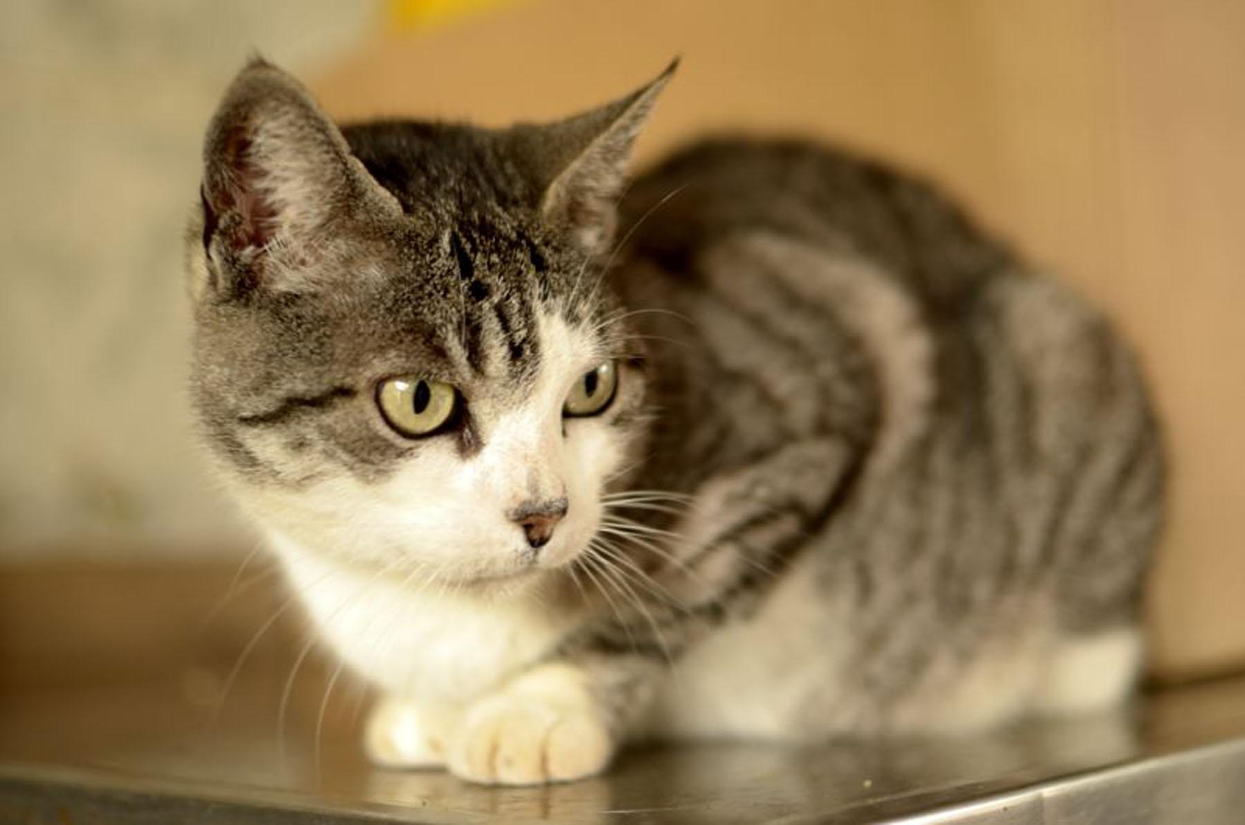 PetFusion ToughGrip Cat Litter Mat