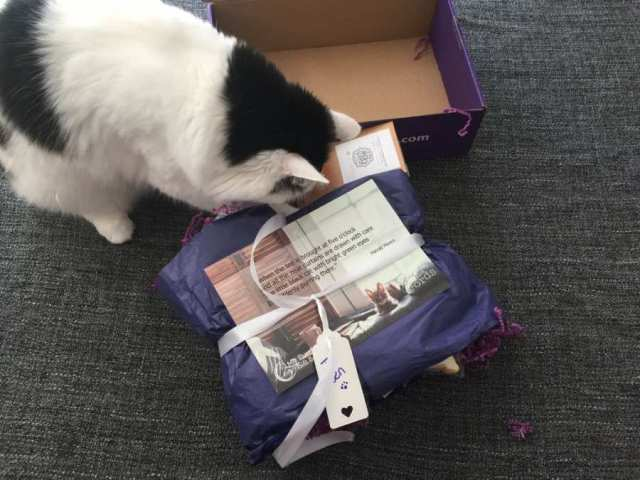 Alf checks out the My Purrfect Gift Box