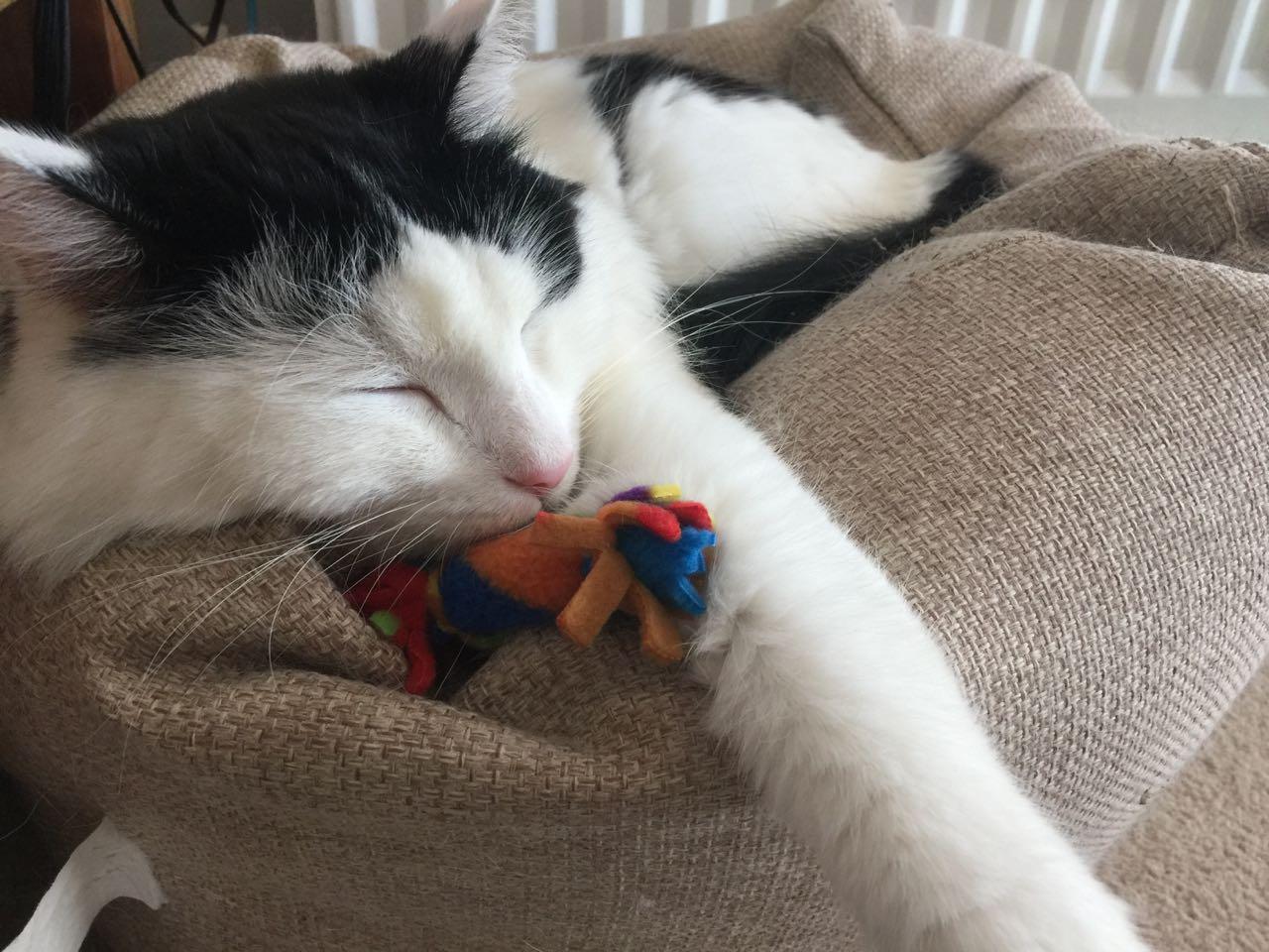 Tillypop's Toys For Pets