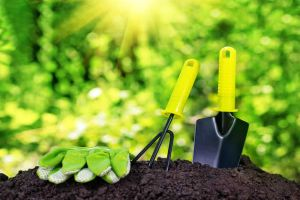 How to Renew Your Lawn Without Digging