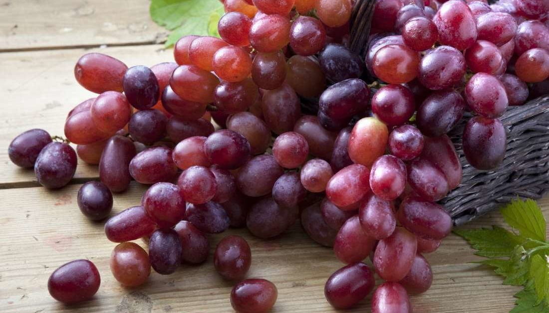 323266 1100 1100x628 - Best Fruits to eat during fever