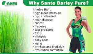 Why Drink Sante Barley Young Grass