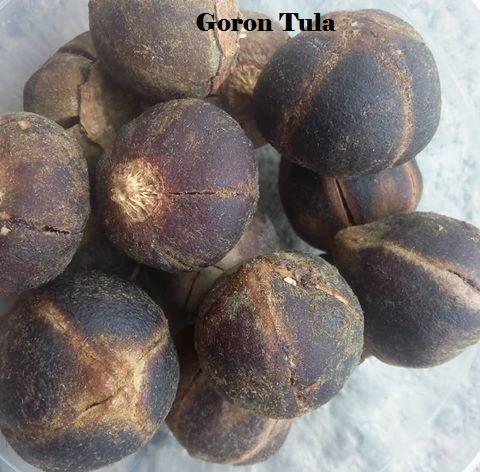 Goron Tula