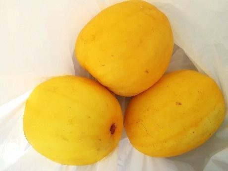 Golden-Melon