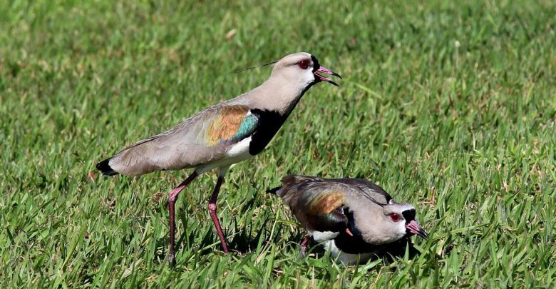 Photo of How to Keep Birds from Eating Grass Seed
