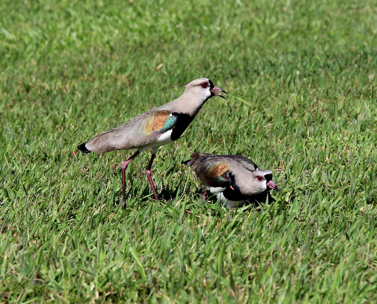 How to keep birds from eating grass seed   Best Home Gear