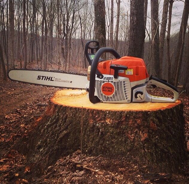 How to Cut and Remove A Tree Stump with a Chainsaw ⋆ Best Home Gear
