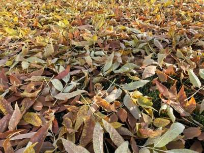 Thick Leaves on grass