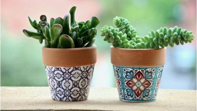 How to care for Cactus and Succulents Indoors | Best Home Gear
