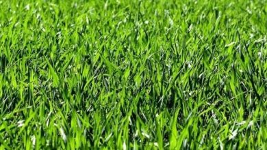 how long does it take grass to grow | Best Home Gear