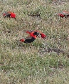 birds eating grass seed - best home gear