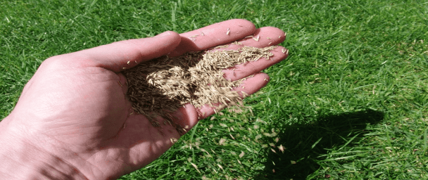 choosing the right grass seed