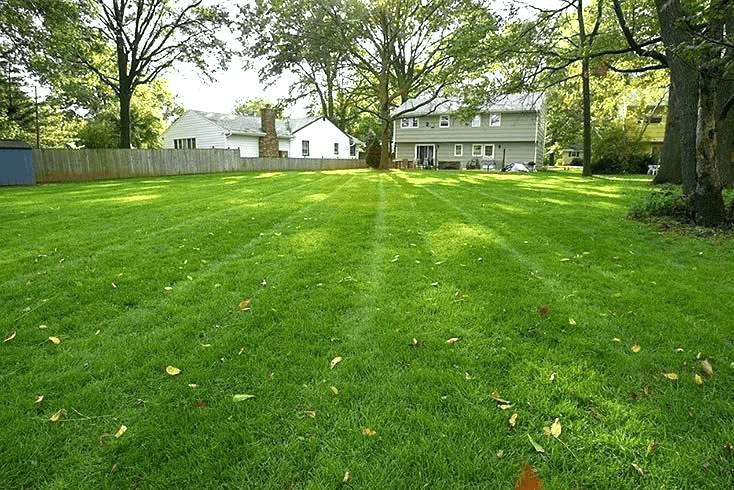 lush grass after planting grass to fix bare spots | Best Home Gear
