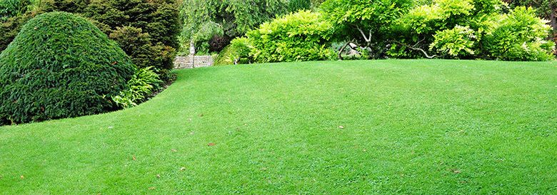 Photo of How To Grow a Lawn Fast