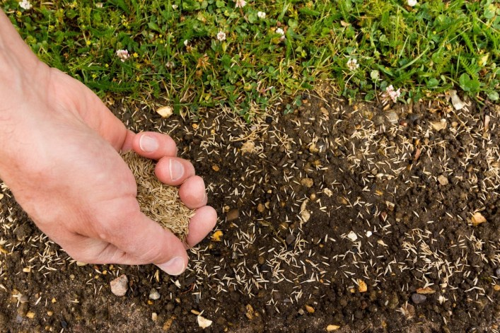 Seeding New Lawn   Best Home Gear
