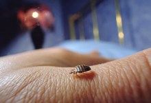 Photo of How To Get Rid Of Bed Bugs Permanently