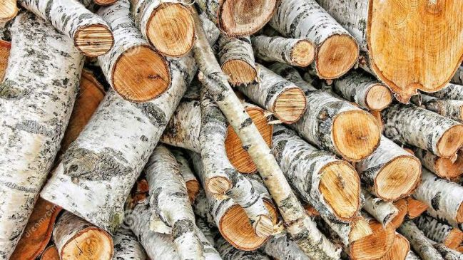 Photo Birch Firewood - Best Home Gear