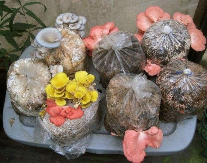 Diy Garden Mushrooms Design11