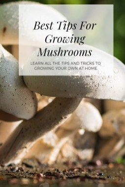 Diy Garden Mushrooms Design22