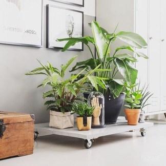 Diy Indoor Plant Display Ideas02