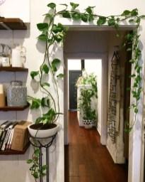 Diy Indoor Plant Display Ideas16