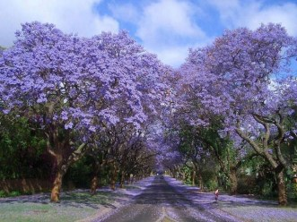Incredibly Magical Tree Tunnels Worldwide You Must Walk Through Them04