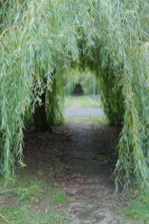 Incredibly Magical Tree Tunnels Worldwide You Must Walk Through Them07