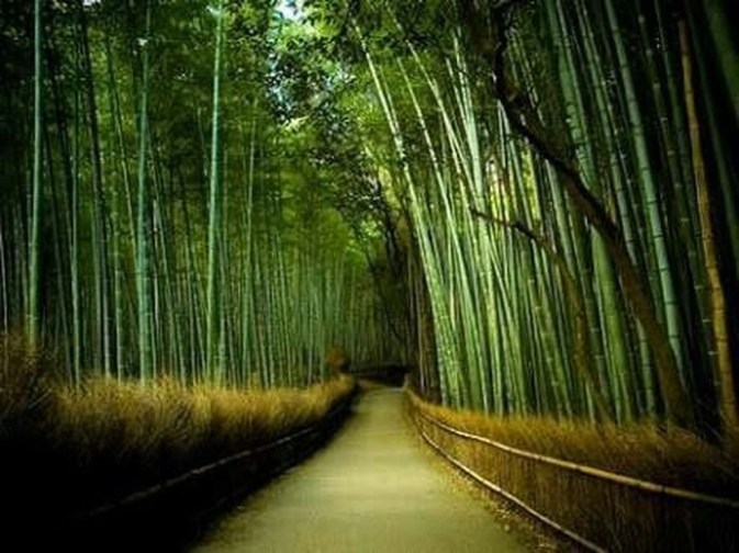 Incredibly Magical Tree Tunnels Worldwide You Must Walk Through Them09