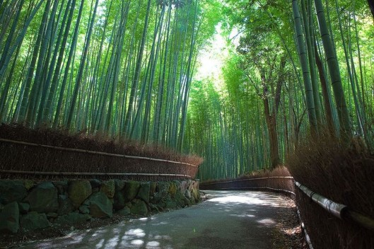 Incredibly Magical Tree Tunnels Worldwide You Must Walk Through Them23