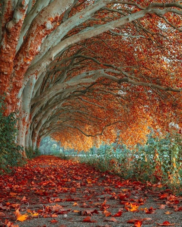 Incredibly Magical Tree Tunnels Worldwide You Must Walk Through Them24