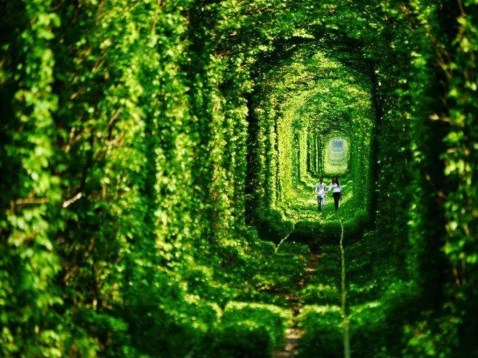 Incredibly Magical Tree Tunnels Worldwide You Must Walk Through Them26