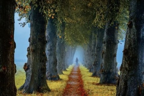 Incredibly Magical Tree Tunnels Worldwide You Must Walk Through Them27