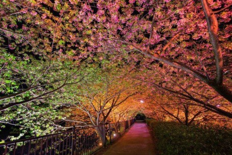 Incredibly Magical Tree Tunnels Worldwide You Must Walk Through Them30