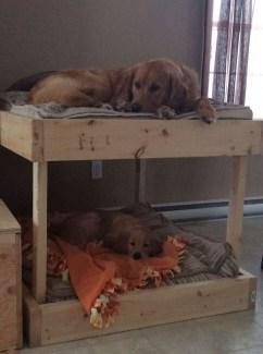 Diy Pet Bed Ideas42