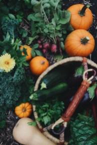 Helpful Tips For Autumn Update Of Your Garden22