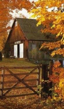 Helpful Tips For Autumn Update Of Your Garden25
