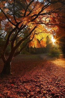Soothing Autumn Landscape Ideas For This Season02