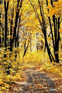 Soothing Autumn Landscape Ideas For This Season06