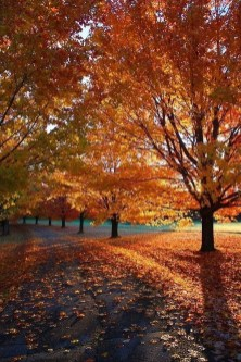 Soothing Autumn Landscape Ideas For This Season11