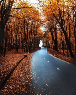 Soothing Autumn Landscape Ideas For This Season12