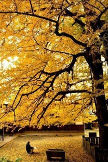 Soothing Autumn Landscape Ideas For This Season31