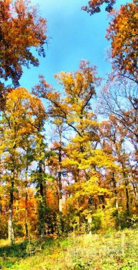 Soothing Autumn Landscape Ideas For This Season44