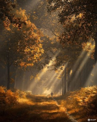 Soothing Autumn Landscape Ideas For This Season46