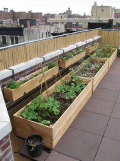 Awesome Rooftop Garden Ideas20