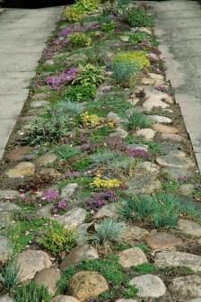 Fresh Ideas Frontyard Garden04