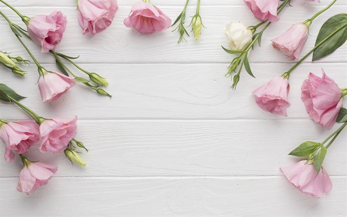 rose eustoma bois blanc fond blanc