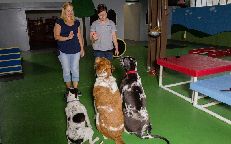 Dogs Sitting during Dog Training